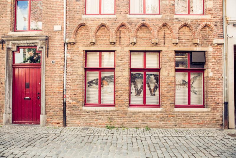 Roots 2019 © Piet De Kersgieter 46 2000Px